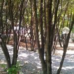 parco-agriturismo (9)